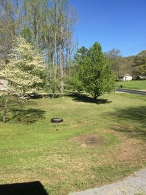 March 28 2016 front yard