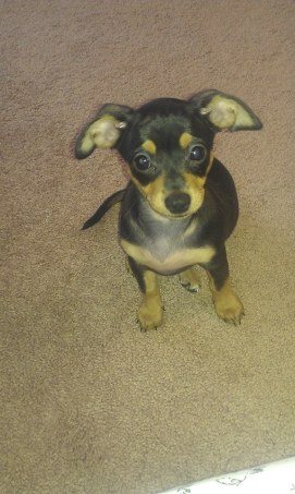 puppy Coco 2013